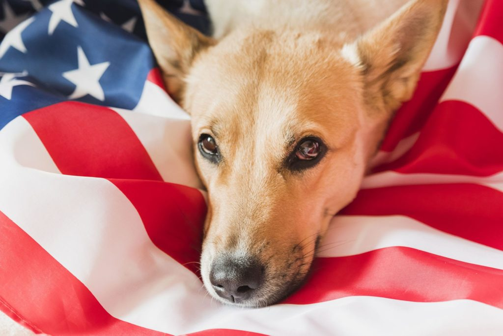 Dog with American Flag