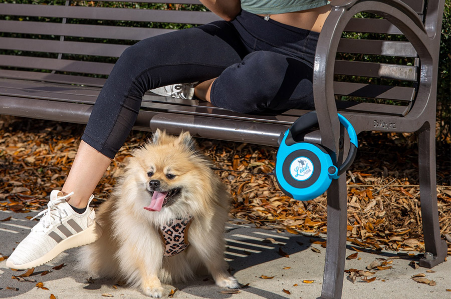 Dog Leash Wrapped On Park Bench