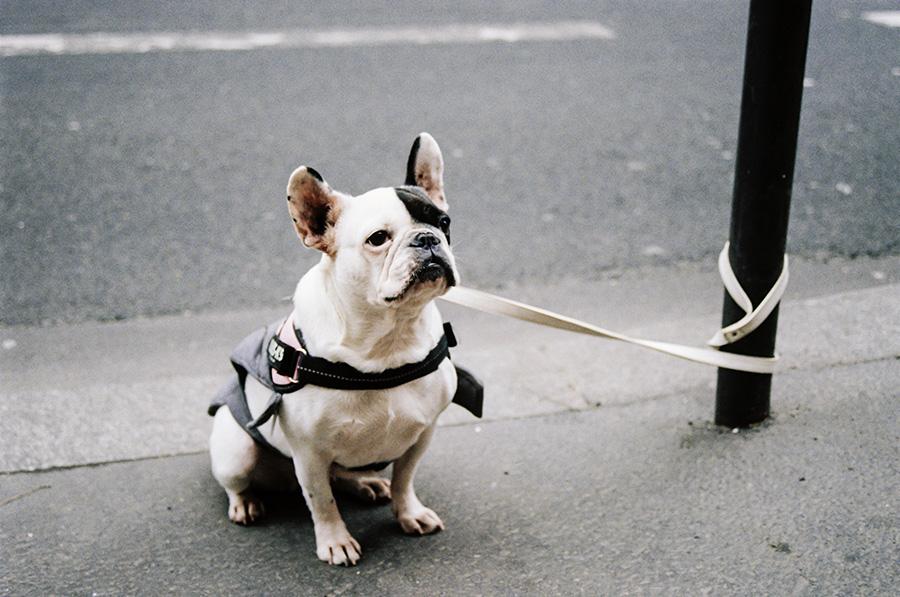 Dog Leash Wrapped